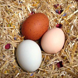 spruce eggs
