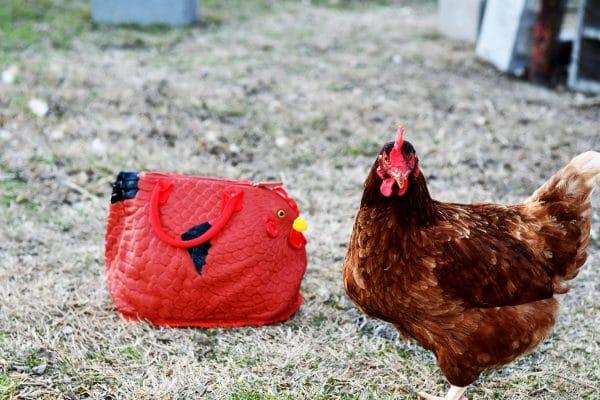hen bag with chicken