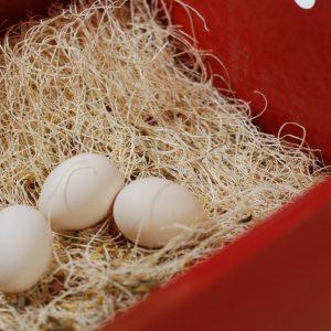 nest box pads