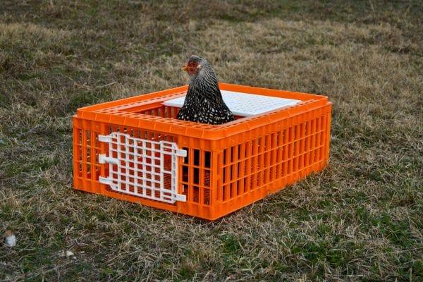 chicken inside crate